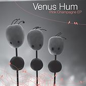 Play & Download Pink Champagne by Venus Hum | Napster