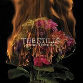 Play & Download Without Feathers by The Stills | Napster