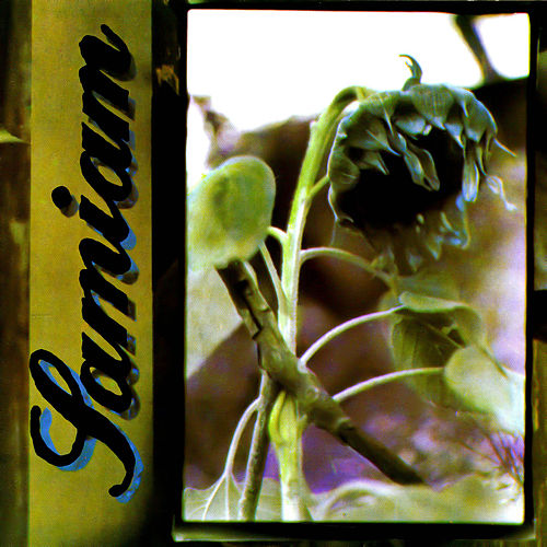 Play & Download Samiam by Samiam | Napster