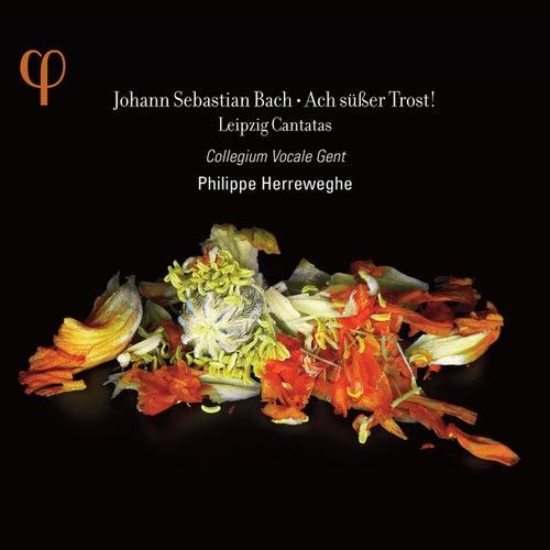 Bach: Ach süßer Trost! Leipzig Cantatas by Various Artists