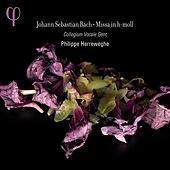 Play & Download Bach: Missa in h-moll by Dorothee Mields | Napster