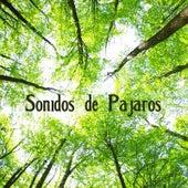 Sonidos de Pajaros (Musicoterapia, Sonidos de la Naturaleza) de Sonidos de la Naturaleza Relax