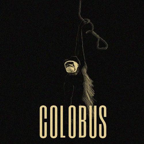 Colobus by Colobus