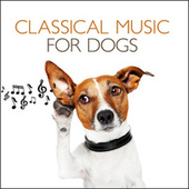 Play & Download Classical Music For Dogs by Various Artists | Napster