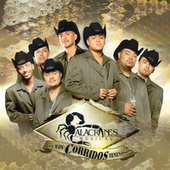 Puros Corridos Venenosos by Alacranes Musical