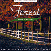 Play & Download Sounds Of The Earth: Forest by David Sun | Napster