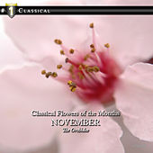 Classical Flowers of the Months - November - The Orchidee by 21st Century Symphony Orchestra