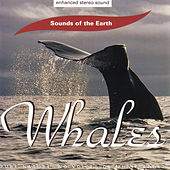 Whales by Sounds Of The Earth