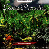 Play & Download Exotic Paradise by Sounds Of The Earth | Napster