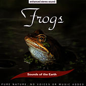 Play & Download Frogs by Sounds Of The Earth | Napster