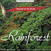 Play & Download Rainforest by Sounds Of The Earth | Napster