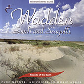 Play & Download Wadden - Sands And Seagulls by Sounds Of The Earth | Napster