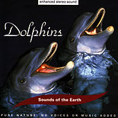Play & Download Dolphins by Sounds Of The Earth | Napster
