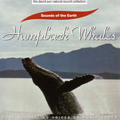 Play & Download Humpback Whales by Sounds Of The Earth | Napster