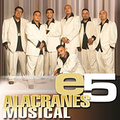 e5 by Alacranes Musical