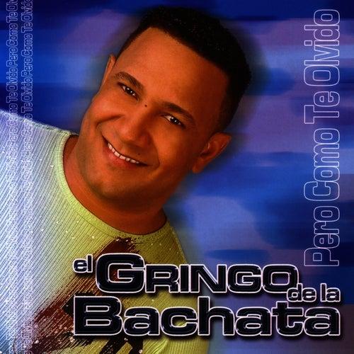 Play & Download Pero Como Te Olvido by El Gringo De La Bachata | Napster