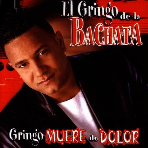 Play & Download Gringo Muere De Dolor by El Gringo De La Bachata | Napster