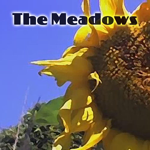 Play & Download Sunflower by The Meadows | Napster