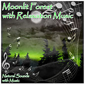 Moonlit Forest with Relaxation Music by Natural Sounds