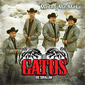 Play & Download Matitas y Mas Matitas by Los Gatos De Sinaloa | Napster