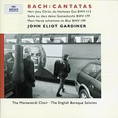 Play & Download J.S. Bach: Cantatas for the 11th Sunday after Trinity by Various Artists | Napster