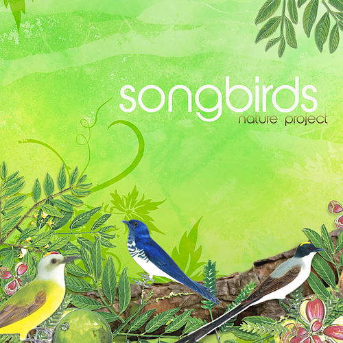 Play & Download Songbirds by Nature Project | Napster