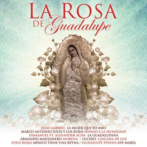 La Rosa De Guadalupe by Various Artists