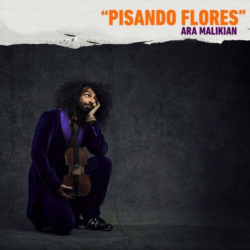 Play & Download Ara Malikian: Pisando Flores by Ara Malikian | Napster