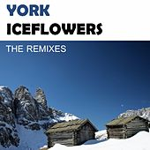 Play & Download Iceflowers (The Remixes) by York | Napster