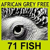 Play & Download African Grey (Free Remix ) by 71 Fish | Napster