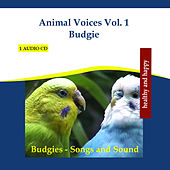 Play & Download Animal Voices Vol. 1 Budgie - Budgies Songs and Sound by Rettenmaier | Napster