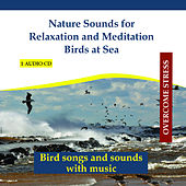 Play & Download Nature Sounds for Relaxation and Meditation - Birds at Sea by Rettenmaier | Napster