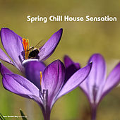 Play & Download Spring Chill House Sensation by Various Artists | Napster