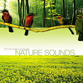 The Most Relaxing Songs with Nature Sounds by Various Artists