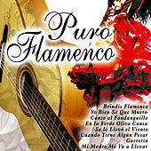 Play & Download Puro Flamenco by Various Artists | Napster
