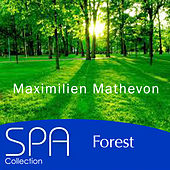 Collection Spa: Forest by Maximilien Mathevon