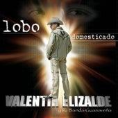 Play & Download Lobo Domesticado by Valentin Elizalde | Napster