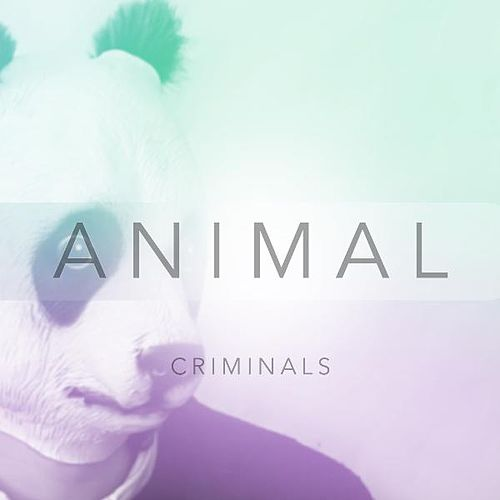 Animal by The Criminals