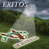 Play & Download Exitos de La Nobleza de Aguililla by La Nobleza De Aguililla | Napster