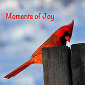 Play & Download Moments of Joy by Various Artists | Napster
