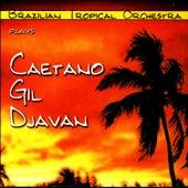 Plays Caetano, Gil, Djavan by Brazilian Tropical Orchestra
