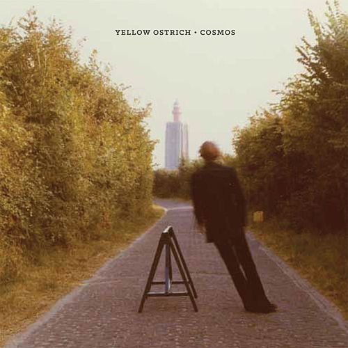 Cosmos by Yellow Ostrich