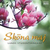 Play & Download Sköna Maj by Lunds Studentsångare | Napster