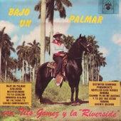 Bajo Un Palmar by Tito Gomez