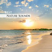 Best Nature Sounds by Nature Sounds Nature Music