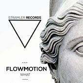 Play & Download What by Flowmotion | Napster