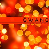 Timing Is Everything by The Swans