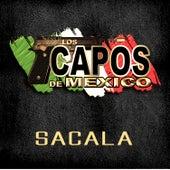 Play & Download Sacala by Los Capos De Mexico | Napster