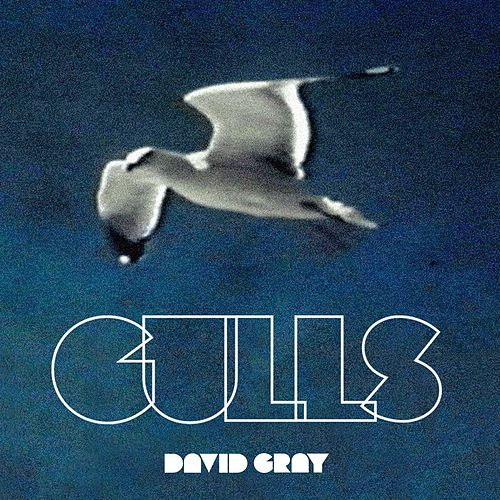 Play & Download Gulls by David Gray | Napster