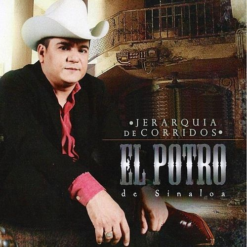Play & Download Jerarquia de Corridos by El Potro De Sinaloa | Napster